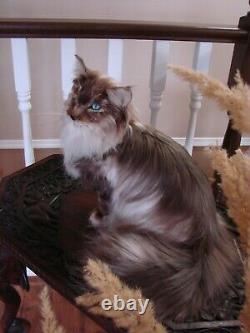 OOAK Realistic Artist Needle Felted Beautiful Long Haired Cat Handmade Wool Silk