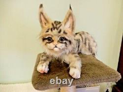 Ooak Réaliste Maine Coon Kitten Cat Artist Handmade Peluche Jouet Posable Flambant Neuf