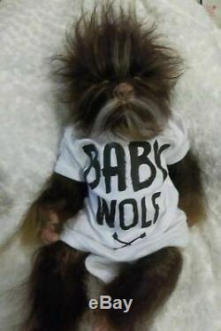 Renaissance Sur Mesure Pour Commander Lucien Hybride Étaient Wolf Artiste Baby Doll Pup
